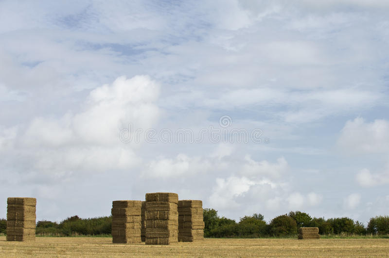 Download Hay stock image. Image of textured, gold, harvest, united - 23238987