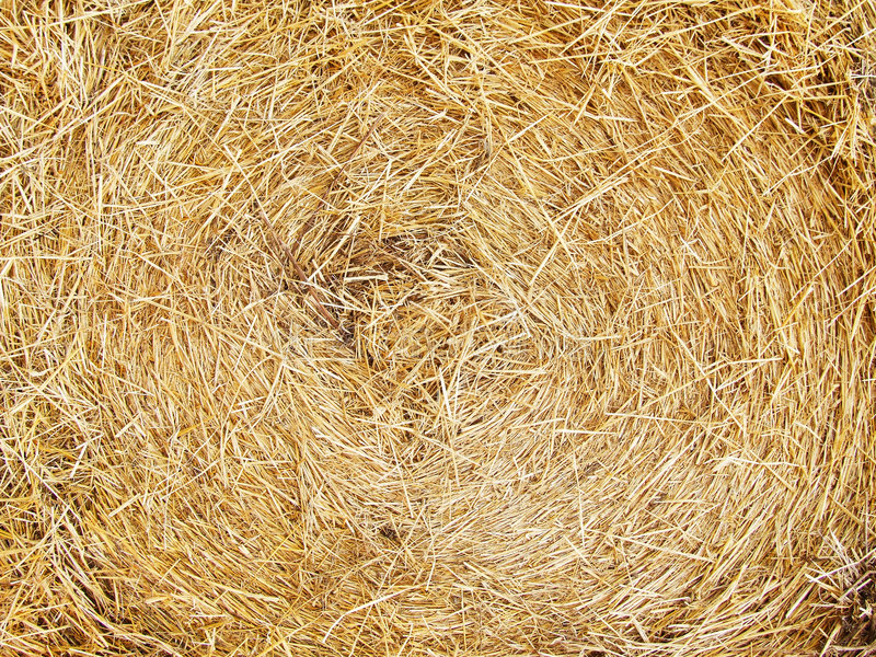 Hay. Preparation in villages after harvesting stock photography