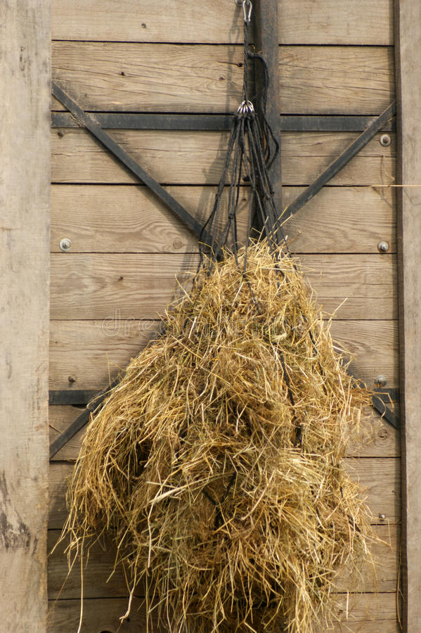 Hay as forage hung in a net. Dry hay as forage hung in a net royalty free stock photo