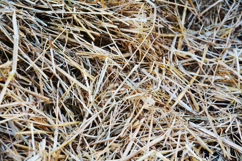 Hay background and texture. In various hues from gey to yellow. Vintage image royalty free stock photos