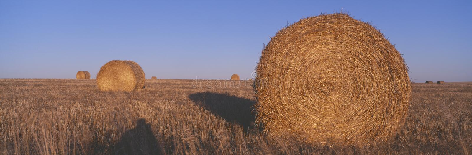 Download Hay Bails, Stock Image - Image: 23171171