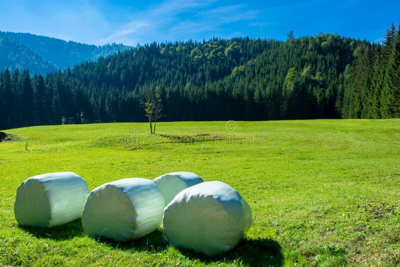 Hay Bails on Mowed Meadow in Alpine Landscape stock image