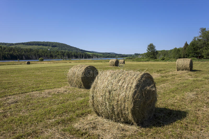 Download Hay Bakes Royalty Free Stock Images - Image: 25832119