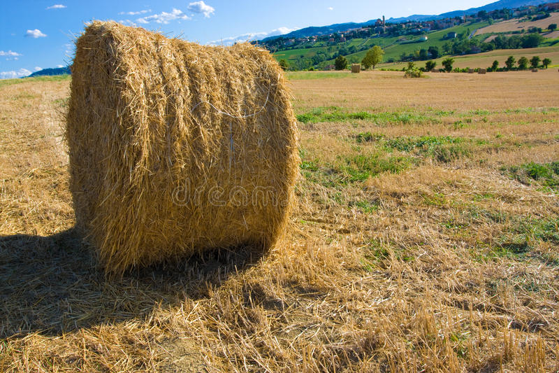 Download Hay bale stock image. Image of corn, autumn, grain, farming - 10295725