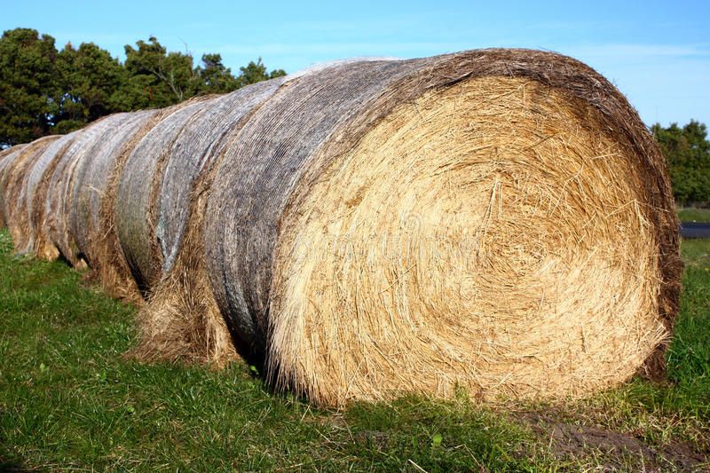 Download Hay bale stock image. Image of crop, autumn, farmland - 10479297