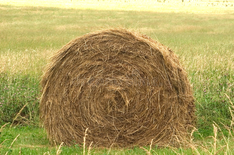 Download Hay Bale stock photo. Image of agriculture, large, crop - 11684