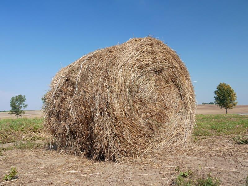Download Hay bale stock image. Image of plantation, field, harvest - 11948079