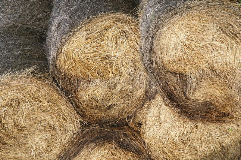 Download Hay bale stock image. Image of country, barbed, circle - 14431193