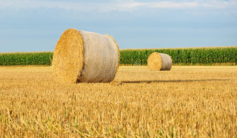 Download Hay bale. stock image. Image of feed, package, harvest - 21101839