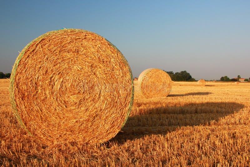 Download Hay bale stock illustration. Illustration of natural - 25614748