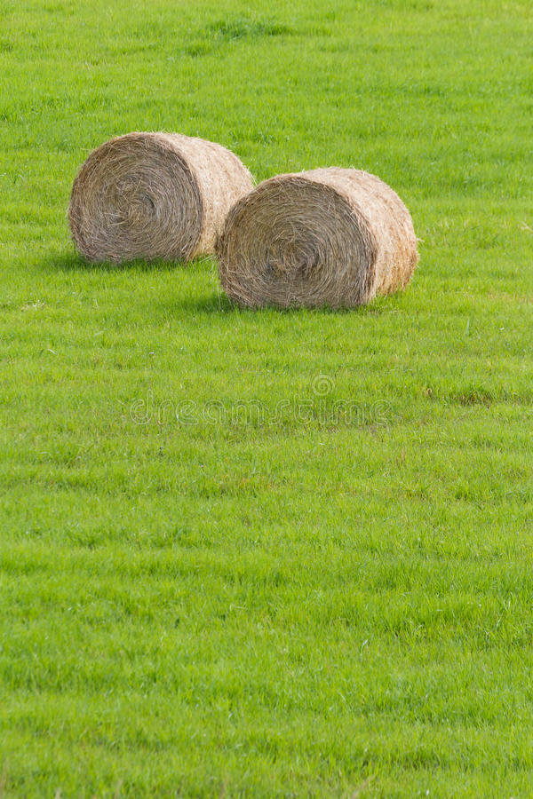 Download Hay Bale stock photo. Image of green, agriculture, plant - 26696566