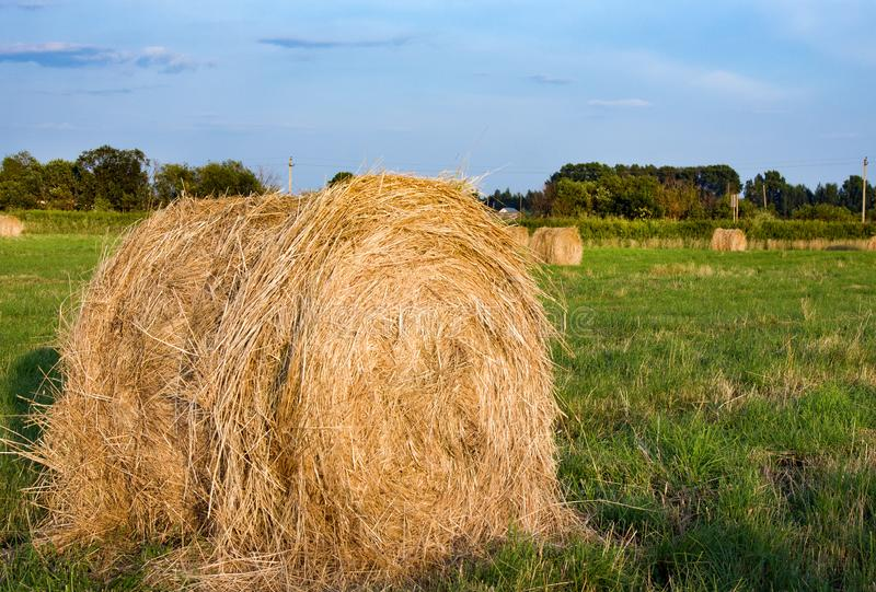 Hay bale. Agriculture field with sky. Rural nature in the farm land stock image
