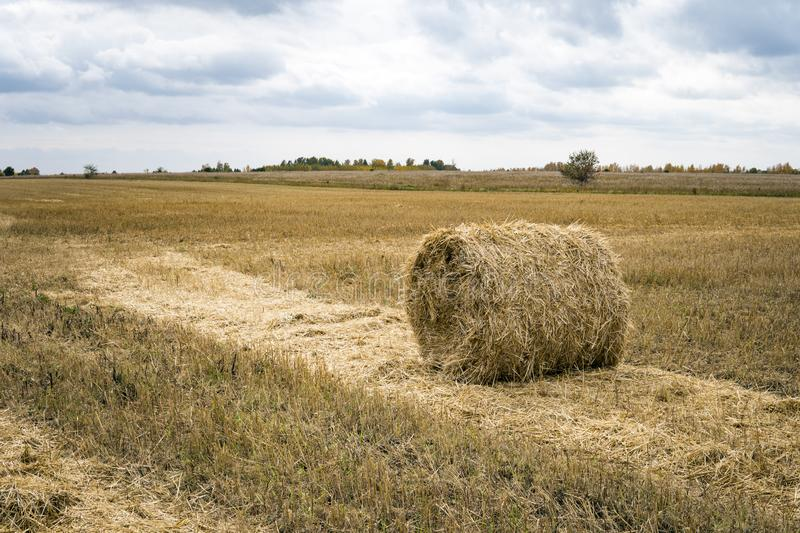 Hay bale. Agriculture field with sky. Rural nature in the farm land. Straw on the meadow. Wheat yellow golden harvest in summer. C royalty free stock photography