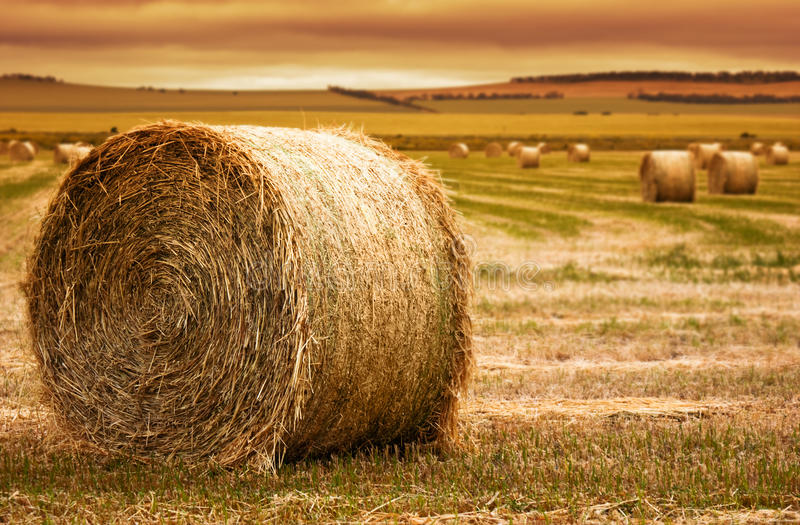 Download Hay Bale Farm stock image. Image of bale, green, production - 16932301