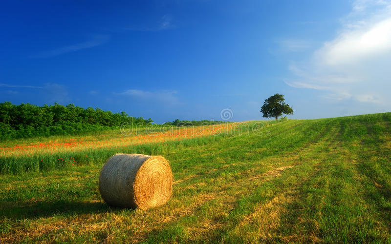 Hay bale farm / Hay bale on the field after harvest, Hungary royalty free stock image