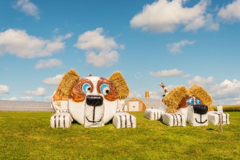 Hay Bale Figure de chien photographie stock libre de droits
