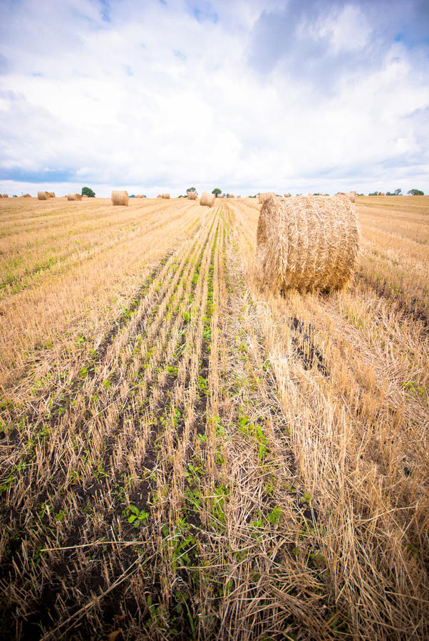 Free Hay Bale In The Field Stock Photo - 26547470