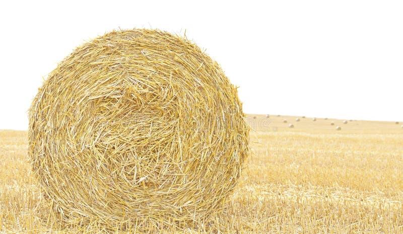 Hay bale isolated close up background. royalty free stock image