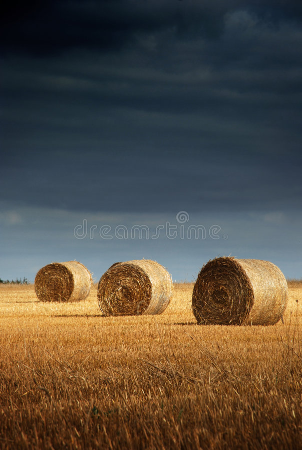 Free Hay Bale Landscape Stock Photography - 3096462