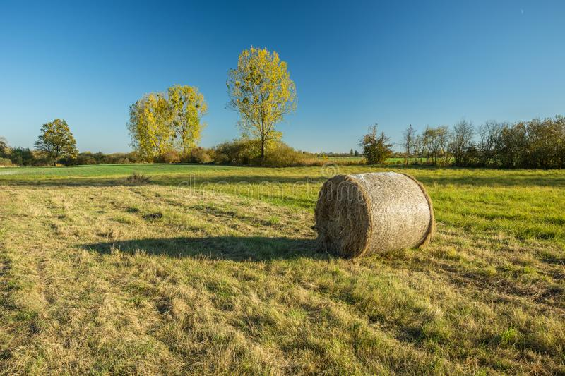 Hay bale in the meadow, autumn trees. Hay bale in the meadow and autumn trees stock photography