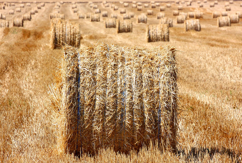 Download Hay bale outdoor stock image. Image of gold, country - 21101069
