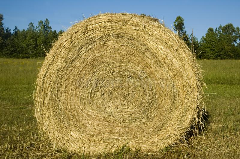 Download Hay Bale Roll Blue Sky stock photo. Image of grain, harvest - 5769458