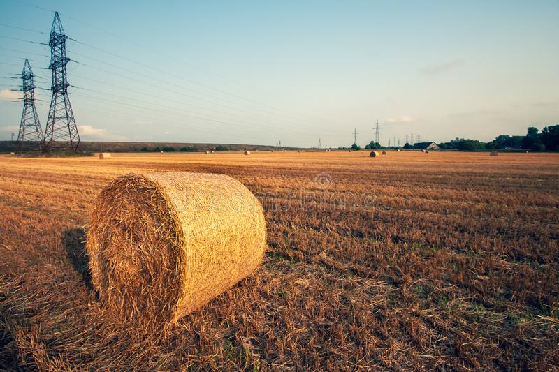 Hay bale in a roll on a mowed field. stock photo