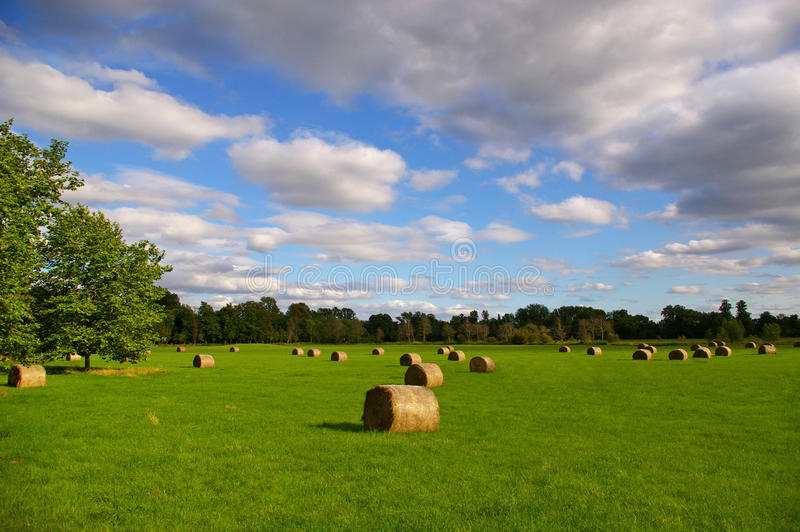 Download Hay bales stock image. Image of countryside, harvesting - 11011001