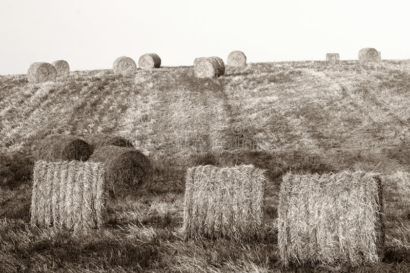 Download Hay Bales Stock Photos - Image: 1414043