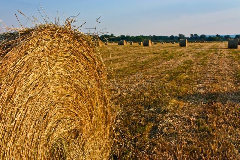 Download Hay Bales Stock Photo - Image: 20349480