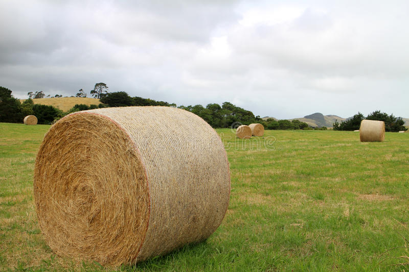 Download Hay bales stock photo. Image of harvest, agriculture - 28648712