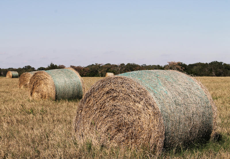 Download Hay bales stock photo. Image of fodder, rounded, bales - 28886562