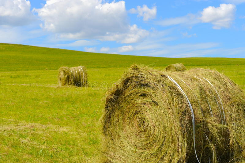 Download Hay bales stock photo. Image of nature, fresh, field - 28964280