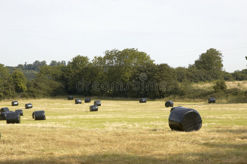 Download Hay Bales stock image. Image of refusing, just, farm, bale - 3064643