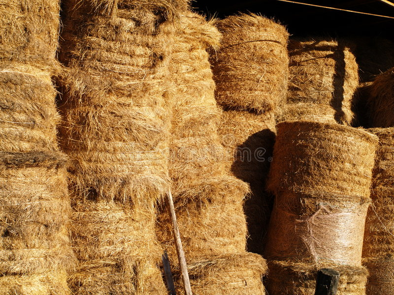 Download Hay bales stock image. Image of coiled, bale, feed, clouds - 3491439