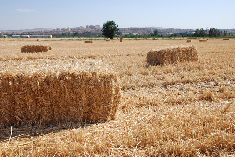 Download Hay bales stock photo. Image of meadow, agriculture, barley - 5860518