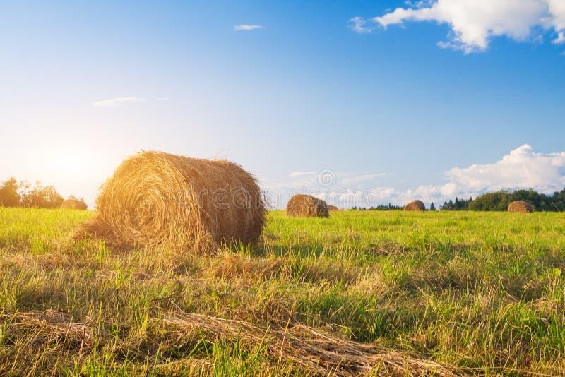Hay Bales auf einem Gebiet lizenzfreies stockfoto