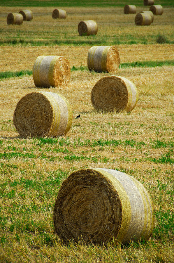 Hay bales and a crow royalty free stock photo