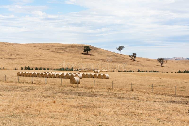 Download Hay Bales On Dry Australian Farm Landscape Stock Image - Image: 24991473