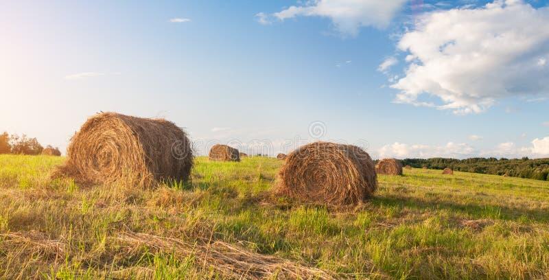 Hay bales in een veld royalty-vrije stock foto