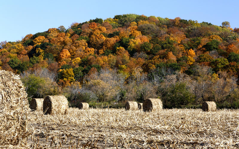 Download Hay bales and fall color stock image. Image of leaves - 28128713