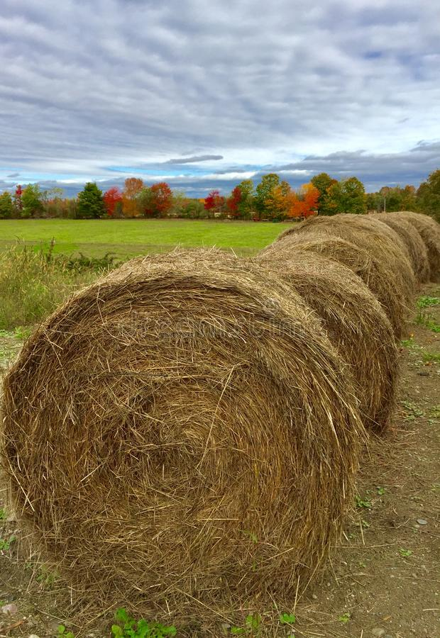 Hay bales in fall, central Maine stock photography