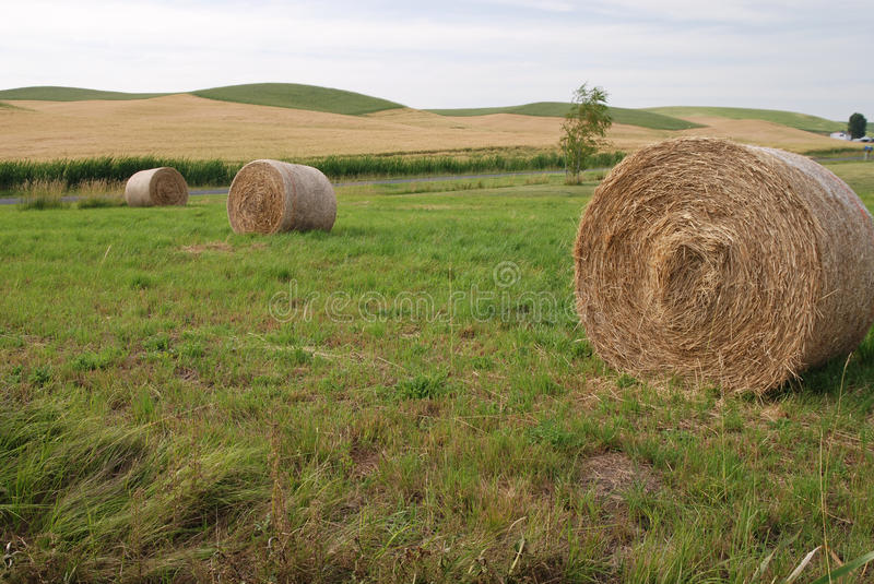 Download Hay Bales on Farmland stock photo. Image of landscape - 11936170