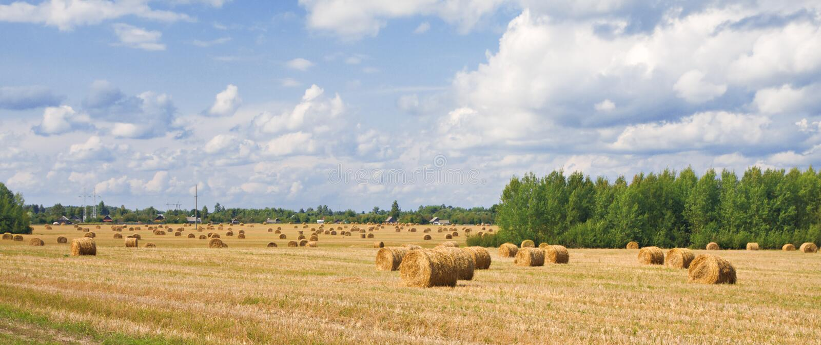 Hay bales in a field royalty free stock photo
