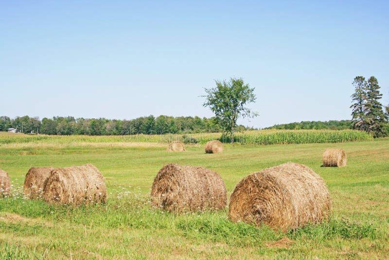 Download Hay Bales in Field stock image. Image of rural, bales - 13477385