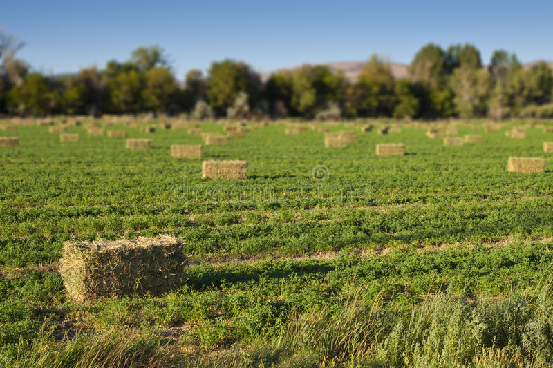 Download Hay Bales in Field stock image. Image of farm, agriculture - 25894663