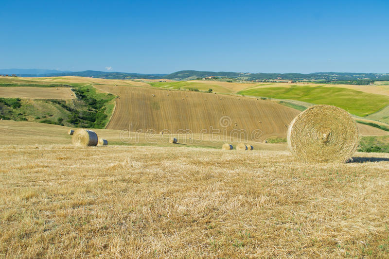 Hay bales in a field royalty free stock images