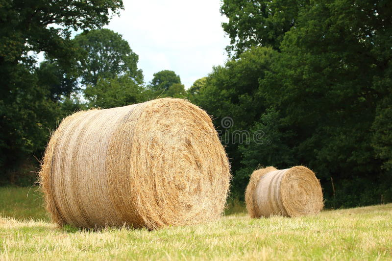 Hay Bales. In a field stock photography