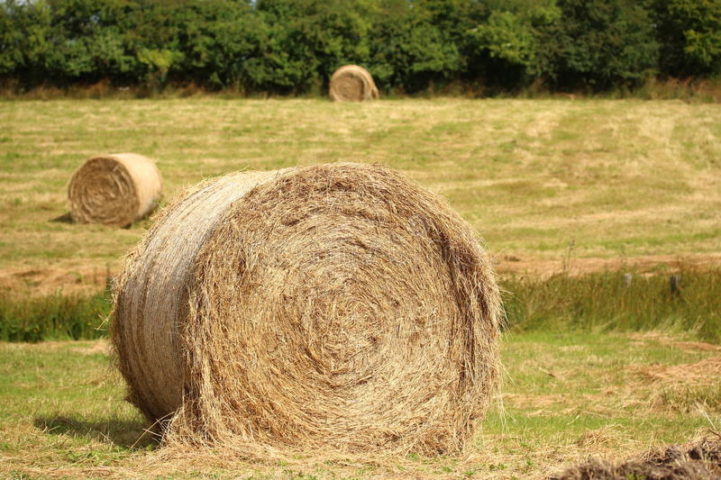 Hay Bales. In a field royalty free stock photography