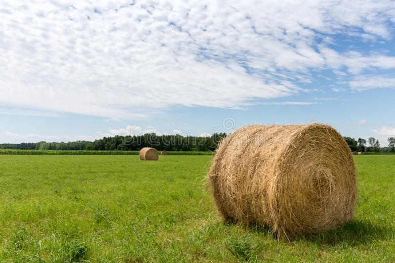 Hay Bales in Field stock image
